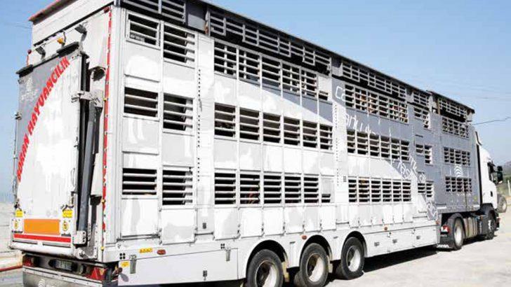 OKT Trailer canlı hayvan taşıma aracı ile hem hayvanları koruyor hem de müşterilerine kazandırıyor